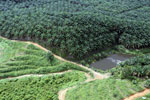 Oil palm plantation in a lowland area near Sandakan, Sabah -- sabah_aerial_2994