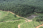 Oil palm plantation in a lowland area near Sandakan, Sabah -- sabah_aerial_2995