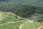 Oil palm plantation in a lowland area near Sandakan, Sabah -- sabah_aerial_2996