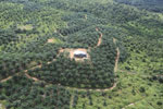 Oil palm plantation in a lowland area near Sandakan, Sabah -- sabah_aerial_2997