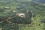 Oil palm plantation in a lowland area near Sandakan, Sabah -- sabah_aerial_2997