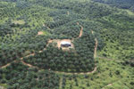 Oil palm plantation in a lowland area near Sandakan, Sabah -- sabah_aerial_2998