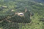 Oil palm plantation in a lowland area near Sandakan, Sabah -- sabah_aerial_2999