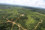 Oil palm plantation in a lowland area near Sandakan, Sabah -- sabah_aerial_3001