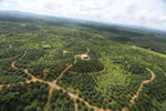Oil palm plantation in a lowland area near Sandakan, Sabah -- sabah_aerial_3002