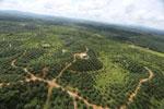 Oil palm plantation in a lowland area near Sandakan, Sabah -- sabah_aerial_3002