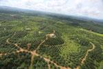 Oil palm plantation in a lowland area near Sandakan, Sabah -- sabah_aerial_3003