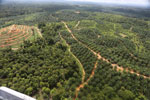 Oil palm plantation in a lowland area near Sandakan, Sabah -- sabah_aerial_3004