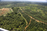 Oil palm plantation in a lowland area near Sandakan, Sabah -- sabah_aerial_3005