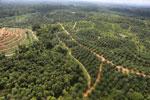 Oil palm plantation in a lowland area near Sandakan, Sabah -- sabah_aerial_3006