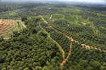 Oil palm plantation in a lowland area near Sandakan, Sabah -- sabah_aerial_3007