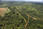 Oil palm estate and rainforest in Malaysian Borneo -- sabah_aerial_3008