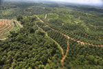 Oil palm estate and rainforest in Malaysian Borneo -- sabah_aerial_3009