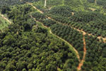 Oil palm estate and rainforest in Malaysian Borneo -- sabah_aerial_3010