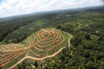 Oil palm estate and rainforest in Malaysian Borneo -- sabah_aerial_3013