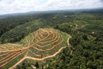 Oil palm estate and rainforest in Malaysian Borneo -- sabah_aerial_3015