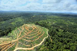 Oil palm estate and rainforest in Malaysian Borneo -- sabah_aerial_3017