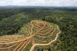 Oil palm estate and rainforest in Malaysian Borneo -- sabah_aerial_3020