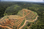 Oil palm estate and rainforest in Malaysian Borneo -- sabah_aerial_3023