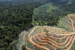 Oil palm estate and rainforest in Malaysian Borneo -- sabah_aerial_3027