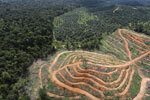 Oil palm estate and rainforest in Malaysian Borneo -- sabah_aerial_3028