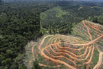 Oil palm estate and rainforest in Malaysian Borneo -- sabah_aerial_3029