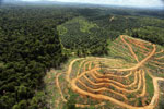 Oil palm estate and rainforest in Malaysian Borneo -- sabah_aerial_3030