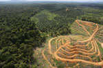 Oil palm estate and rainforest in Malaysian Borneo -- sabah_aerial_3032