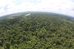 Degraded lowland forest in Borneo