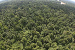 Degraded lowland forest in Borneo -- sabah_aerial_3038