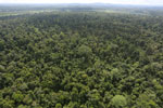 Degraded lowland forest in Borneo -- sabah_aerial_3039