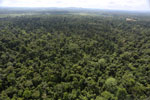 Degraded lowland forest in Borneo -- sabah_aerial_3040