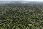 Degraded lowland forest in Borneo -- sabah_aerial_3041