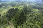 Forest clearing in Sabah -- sabah_aerial_3078
