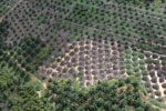Palm oil plantation in Borneo -- sabah_aerial_3079