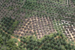 Palm oil plantation in Borneo -- sabah_aerial_3080