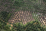 Palm oil plantation in Borneo -- sabah_aerial_3081