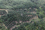 Palm oil plantation in Borneo -- sabah_aerial_3082