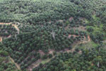 Palm oil plantation in Borneo -- sabah_aerial_3083