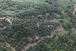 Palm oil plantation in Borneo -- sabah_aerial_3084