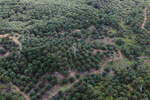 Palm oil plantation in Borneo -- sabah_aerial_3085