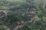 Palm oil plantation in Borneo -- sabah_aerial_3086