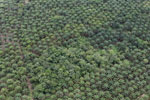 Palm oil plantation in Borneo -- sabah_aerial_3087
