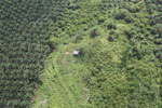 Palm oil plantation in Borneo -- sabah_aerial_3089