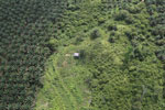 Palm oil plantation in Borneo -- sabah_aerial_3090
