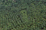 Palm oil plantation in Borneo -- sabah_aerial_3095