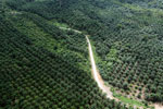 Palm oil plantation in Borneo -- sabah_aerial_3097