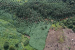 Palm oil plantation in Borneo -- sabah_aerial_3100