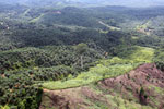 Palm oil plantation in Borneo -- sabah_aerial_3102