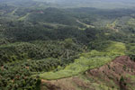 Palm oil plantation in Borneo -- sabah_aerial_3103